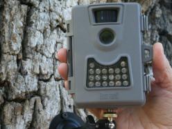 Marin縣安裝百只攝像頭晝夜拍攝動物