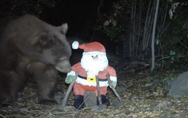 小熊森林中遇上聖誕老人玩偶 揮熊掌一掌拍翻