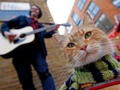 倫敦街頭一隻貓的故事,震驚全世界!