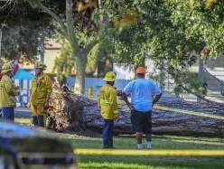 博物館外巨大松樹傾倒 夏令營八名孩子受傷