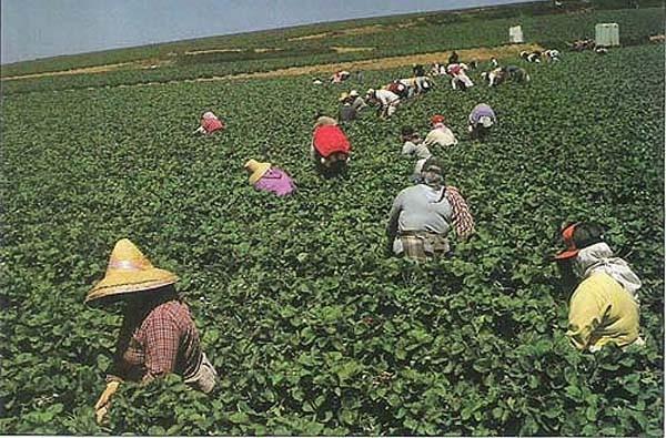 乾旱越嚴重 加州農業銷售看來越好