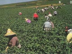 州議會通過農工等同一般人加班時數法案