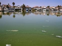 健康官員發出Discovery Bay水域藻華警示