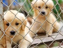 San Mateo動物收容機構遭員工投訴人手不足和虐待動物