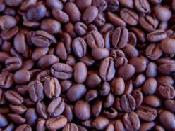 蜜蜂減少和氣候變化影響咖啡產量